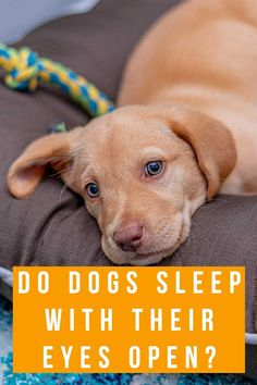 do dogs sleep with their eyes open