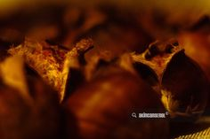 Chestnut in Oven - Stock Chestnut macro photos in a oven. // by Akın Can Şenol under Macro category. It's licensed under a Creative Commons Attribution-NonCommercial 4.0 International License. Via 500px http://akncan.me/1XzCyER Tags: autumnchestnutcloseupcookdeliciousfoodmacroovensnackwarmstock