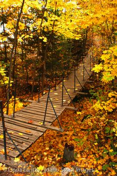 Suspension Bridge on Tubbs Hill | Fall Colors in Idaho