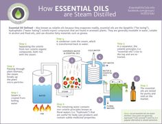 How Essential Oils are Steam Distilled-infographic