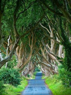 Northern Ireland mystical trees dancing