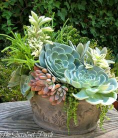 Dazzling succulent arrangements are designed using the principles and elements of floral design. See you can learn to create your own displays! Pin now, explore at leisure! Colorful Succulents, Growing Succulents, Succulents In Containers, Cacti And Succulents, Planting Succulents, Planting Flowers, Container Flowers, Flowers Garden, Container Plants
