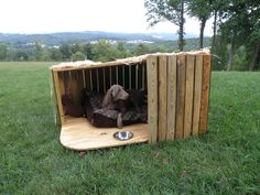 Unique dog house...Sugar would love this on rainy days!