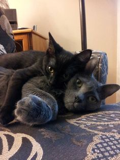 Kitty hugs are the best! & http://www.pinterest.com/pin/34551122115860281/