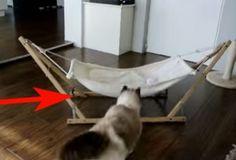 Los gatos en las redes sociales siempre causan risas y asombro