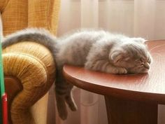 that's one tired kitten ~ the back feet dangling under the table ~ too cute