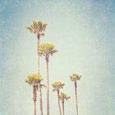 California Beach Decor, Summer Palm Trees, Seaside Photography, Los Angeles, minimalist decor - California Dreamin' (8x8)