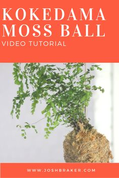Learn how to create your own kokedama moss ball with my easy to follow video tutorial. Have a go for yourself! Please share if you find my tutorial useful.