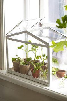 Ikea SOCKER greenhouse € 12.95 Art.nr:   701.866.03 ~ via http://nl.elle.be/Fashion/Shopping/SHOPPING-Last-minute-cadeautjes-voor-moederdag#