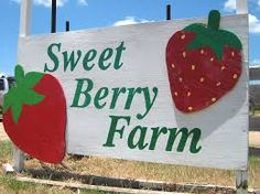 Sweet Berry Farm Marble Falls. Visit the Pumpkin Patch in Fall. Pick Strawberries, Blackberries & Peaches in Spring