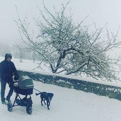 A spasso sotto la neve!  #winter #trentinodavivere