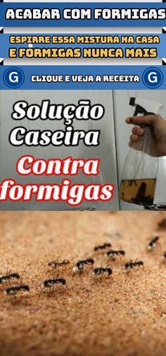 Espirre essa mistura e você nunca mais vai ver formigas em sua casa  #dicas #caseiras #solução #para #acabar #com #formigas #receita-#receitas