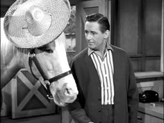 Mister Ed S5 | Ed The Sentry - YouTube