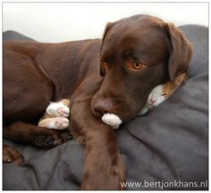 This are my dog and cat Hessel and hannes.