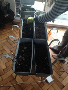 Planting up the high-rise allotment again...