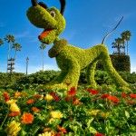 The Green Thumb of Epcot