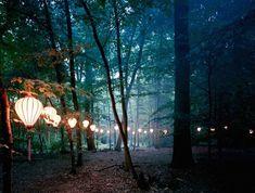 Luzes na Floresta - por Lottie Davies - Stefany Blog