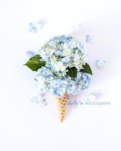 TITLE- Double Scoop - Big blue hydrangea flowers in a cone. A double scoop of happiness in this whimsical art print. Great for kids rooms. Fine Art Print - Professionally printed upon order. Select your size from the drop down menu.  My photographs are printed on premium acid-free, archival paper,