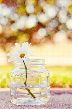 A Touch of Spring with a single Daisy flower in glass jar or mason jar. Could use a different single white or wild flower, for beautiful a simple spring time arrangement!