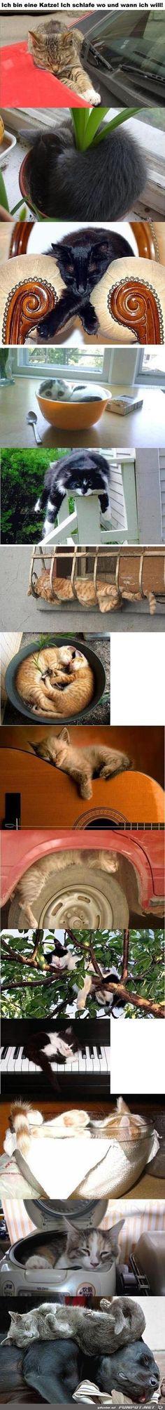 Lustige Schlafplätze
