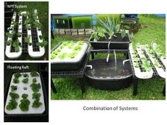 Growing of Plants Using Marine Aquaculture With Aquaponics