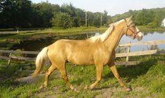 Alimentación y cólicos en el caballo - http://www.noticaballos.com/alimentacion-colicos-caballo.html