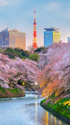 This popular Japanese festival stems from the tradition of hanami – the ancient Japanese custom of e. Mont Rushmore, Tour Eiffel, Iphone Wallpaper Japan, Angkor, Japon Tokyo, Kyoto Japan, Ueno Park, Japanese Festival, Sites Touristiques