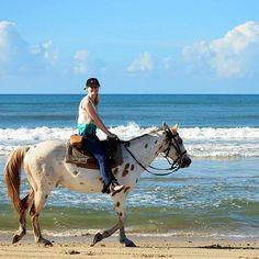 Beach Horseback Riding on Hatteras Island, NC | Kitty Hawk Kites