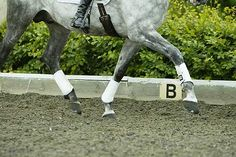 5 top tips to help your horse concentrate