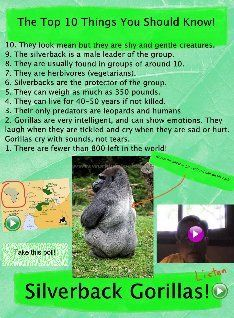 Silverback Gorilla Glogster by Terry Erickson. Mother Daughter Book Club, School Library Lessons, Zoo Project, One And Only Ivan, Silverback Gorilla, Alpha Male, Guided Reading, Read Aloud, Learning Activities