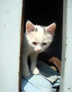 Bolognashire: il gatto