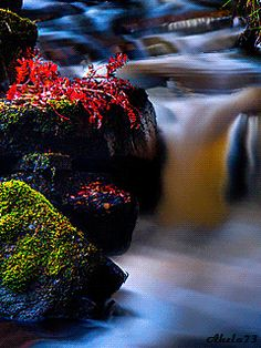 Forum > Fire And Water. Collection Of Screensavers From Nature Gif, Nature Images, Nature Pictures, Beautiful Nature Wallpaper, Beautiful Gif, Beautiful Places, Rosas Gif, Beautiful Scenery Pictures, Gif Photo