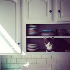 Cat plate.