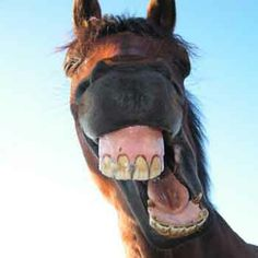 Love the wild look when a horse yawns!