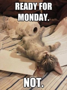 Ready For Monday - Funny - Cat - Humor ...........click here to find out more http://googydog.com