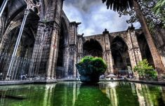 Barcelona-Cathedral_Cathedral-garden_7086.jpg (848×545)