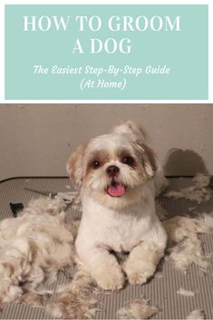 Dog haircuts - I am so excited to be sharing with you my tips on how to cut your dog's hair There are so many things to remember as you do this, so I wanted to share with you the most effective strategies and id Goldendoodle Grooming, Dog Grooming Tips, Poodle Grooming, Mini Goldendoodle, Dog Grooming Business, Yorkie, Dog Grooming Styles, Dog Grooming Salons, Dog Paws