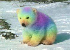 Rainbow Polar Bear by bluemoongem.deviantart.com on @deviantART