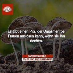 Besuche uns auf www.Faktastisch.net und folge uns auf Facebook! Facebook, The Originals, Instagram Posts