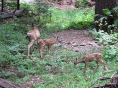 Image detail for -File:Yosemite National Park Wildlife. Yosemite National Park, National Parks, Sierra Nevada, Travel Alone, Solo Travel, High Quality Images, Trip Planning, Wildlife, Animals
