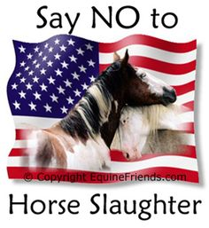THESE HEINOUS ASSAULTS ON OUR NATION'S WILD HORSES ARE AN ABOMINATION…