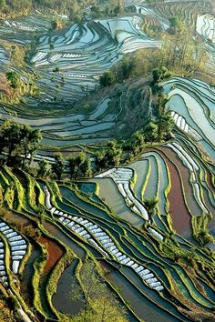 a terraced landscape that looks like tapestry art.