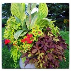 100 Container Garden Ideas For Arkansas, Texas, Tennessee and The South, Part 1 Jonesboro | Memphis | South Lawn Care Landscape Jonesboro Garden Flowers Container Gardens Best Flowers For Container Gardens BadAsFlowers Arkansas Garden Annuals