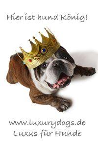 Hunde: Zubehör große Auswahl