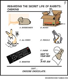 More reasons to NOT get a bunny for Easter…