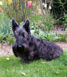 Scottie Cooper: Newly groomed and looking good