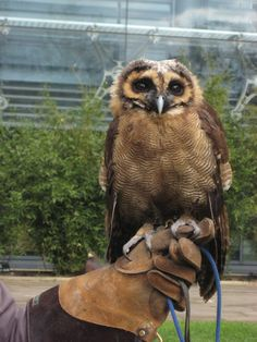 Baby owl outside of the Natural History Museum in London, UK