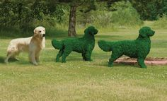 Golden Retriever Mossed Topiary, how  cute