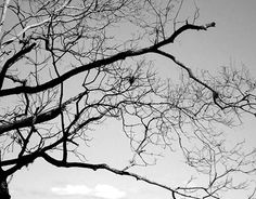 "Check out new work on my @Behance portfolio: ""Dead Trees"" http://be.net/gallery/37999103/Dead-Trees"