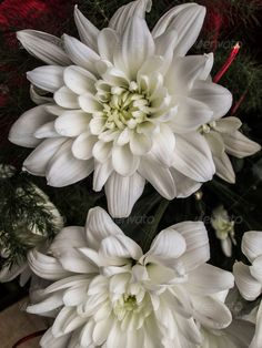 White chrysanths bouquet 3